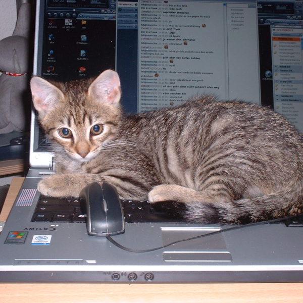 Часто помехой для работы в Интернете становится вовсе не заниженная провайдером скорость